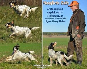 Heegårds Sally og fører Harri Heino. Sally blev årets unghund i Finland 2013
